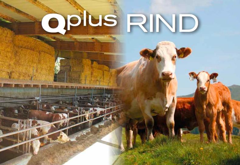 Qplus Rind